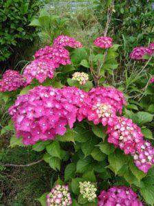 梅雨の庭・・・