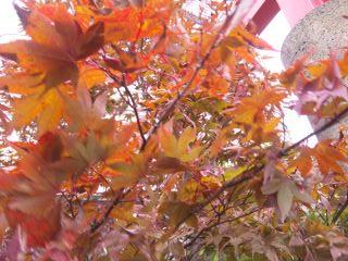 すっかり秋