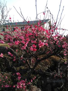 春の陽気!!